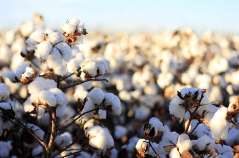 Amendment 1: Say No to Big Cotton on Tuesday