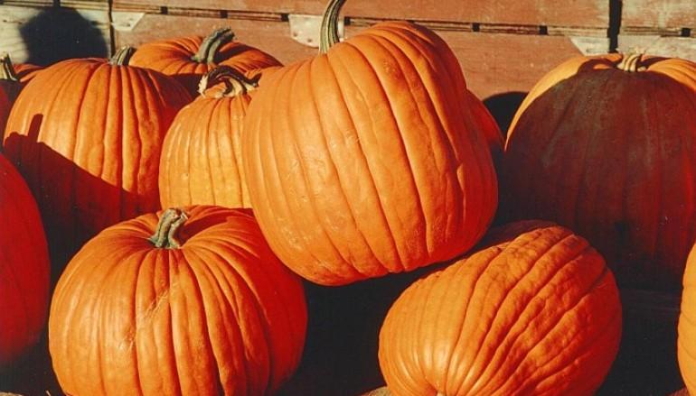 Sylvania Announces New Fall Festival