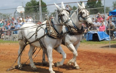 "The Voice's Justin Chain to Headline ""Mule Day"""