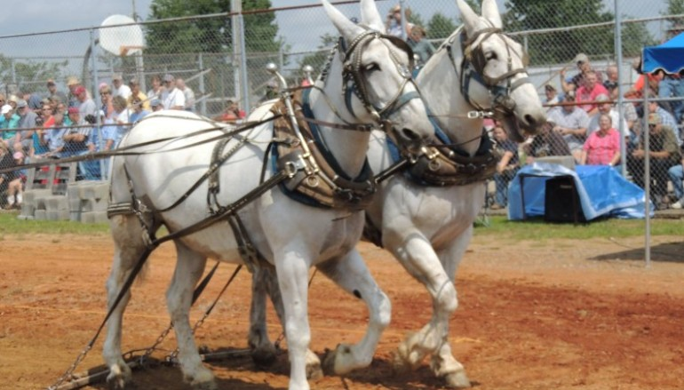 """The Voice's Justin Chain to Headline """"Mule Day"""""""