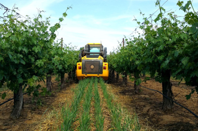 Additional Disaster Coverage Available for Specialty Crop Growers