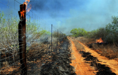 Fire Suggested as Wildlife Management Tool