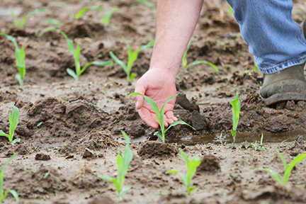 FARMERS TRY TO CATCH UP ON PLANTING DURING DRY DAYS