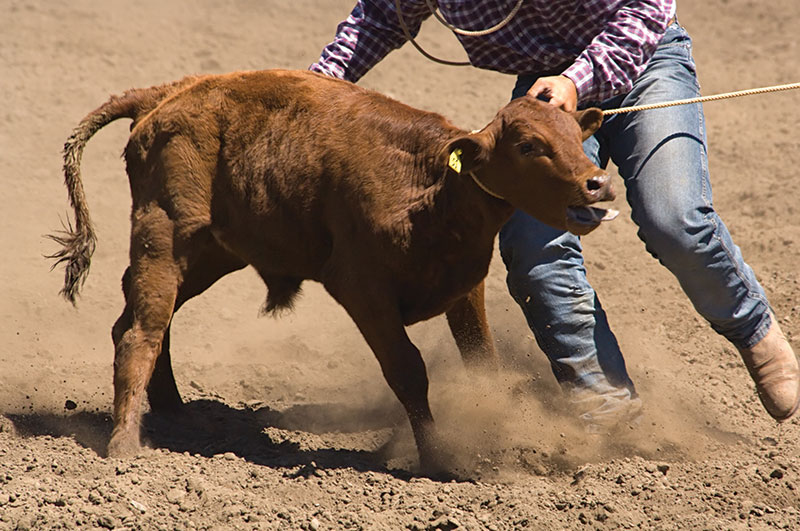Rainsville hosts 2nd Annual Bull Bash