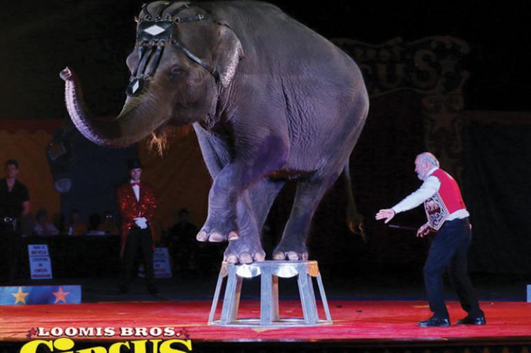 Spokesman says Loomis Bros. Circus is proud to showcase elephants