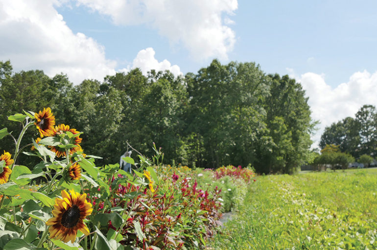 Farm at Windy Hill hosts 'Soup and Song' tomorrow!