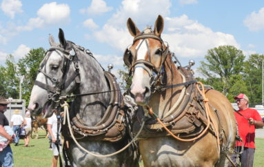 30th Ider Mule Day a success