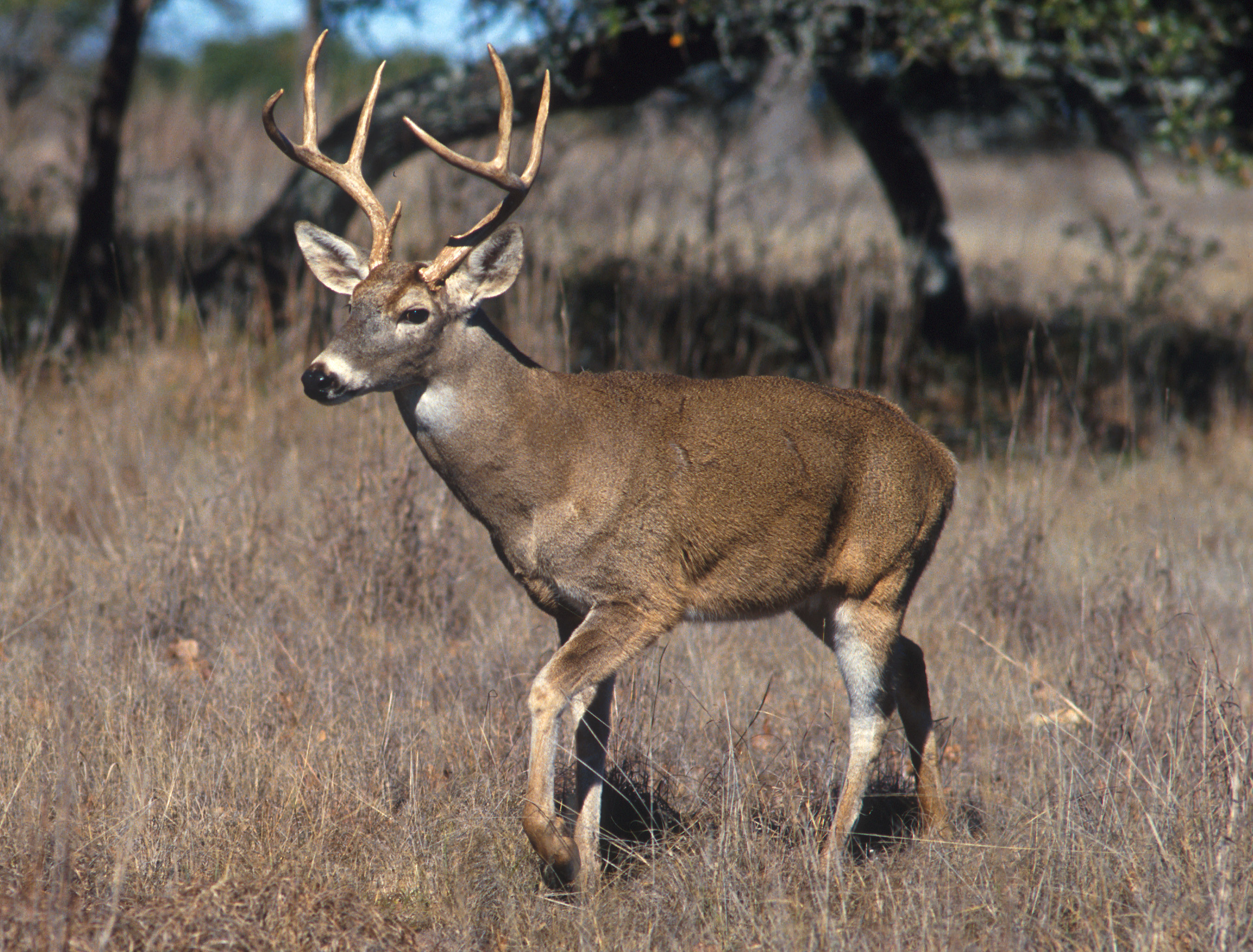 Deer, Turkey killed in Alabama this season must be reported