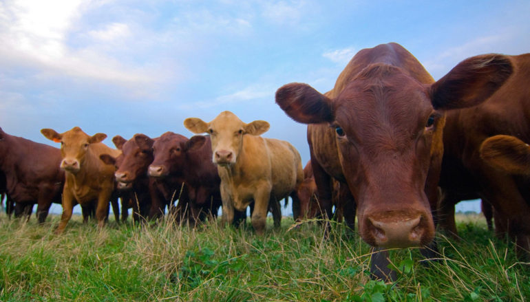 County Livestock Producers may qualify for drought assistance