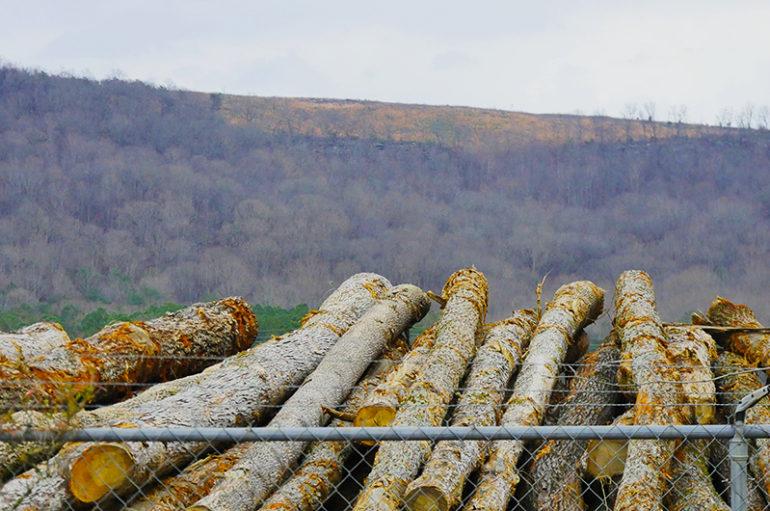 Fort Payne holds Public Meeting on Logging Ordinance (VIDEO)