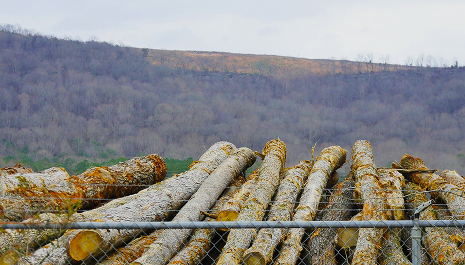 Fort Payne holds Public Meeting on Logging Ordinance (VIDEO)