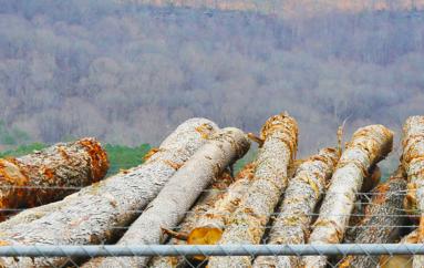 Fort Payne Council releases revised logging ordinance