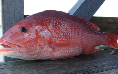 Alabama politicians blast Federal Gov't on Red Snapper Season
