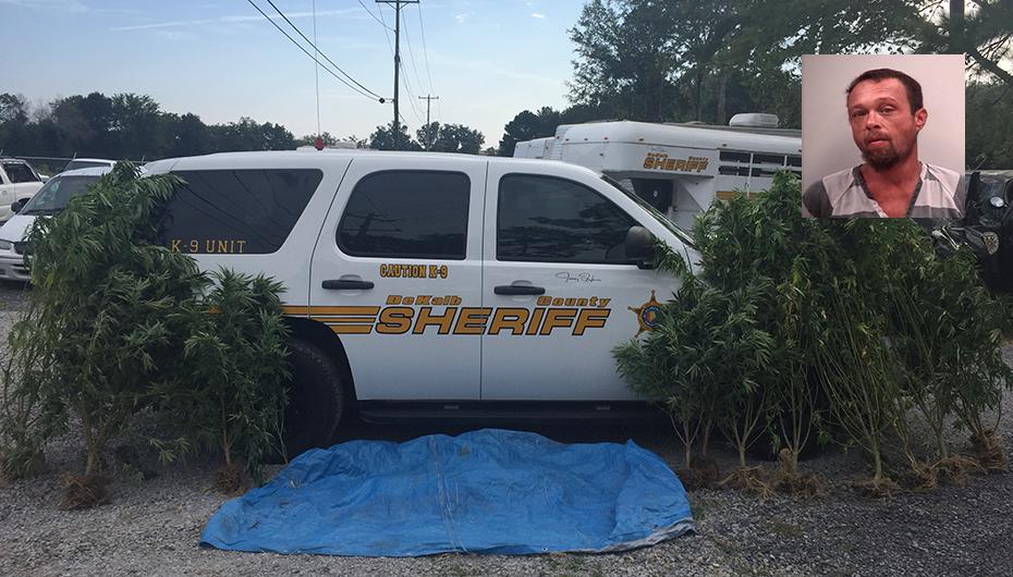 Bridgeport Man arrested near Valley Head in stolen vehicle with Marijuana growing inside