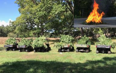 Over 1500 Marijuana Plants found in DeKalb destroyed yesterday