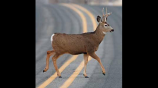 Oh Deer: Alabama in 'High Risk' of Crashes