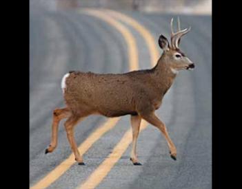 Oh Deer: Alabama in 'High Risk' of Crashes
